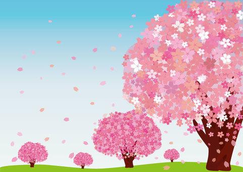 Sakura (Postcard / Background: Blue Sky)