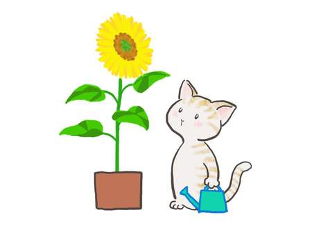 Sunflower cat 3