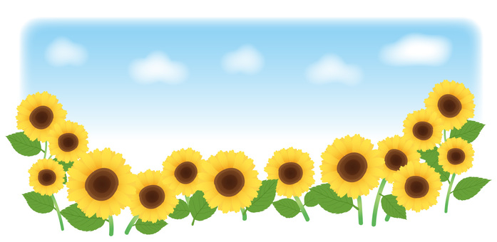 Sunflowers and the sky