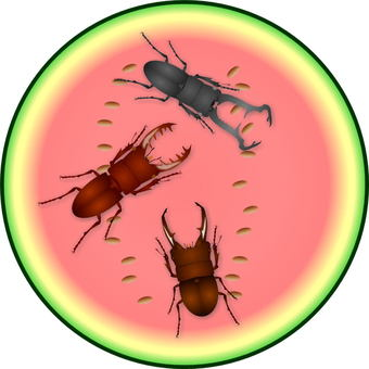 Stag beetle swarming in watermelon