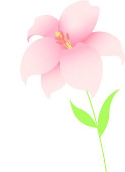 Lilies _ 1