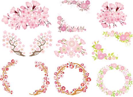春天的花朵櫻花櫻花花束框架花束背景