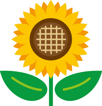 Sunflower (sunflower)