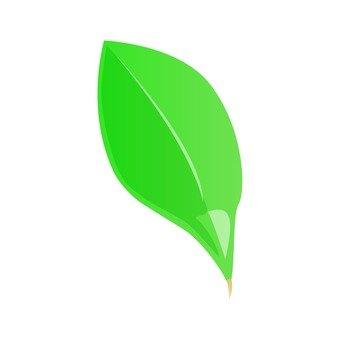 Oval leaf 1