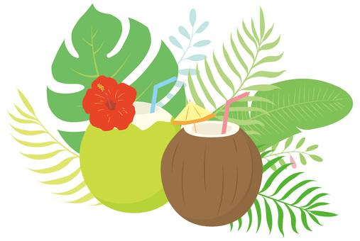 Tropical coconut palm fruit drink