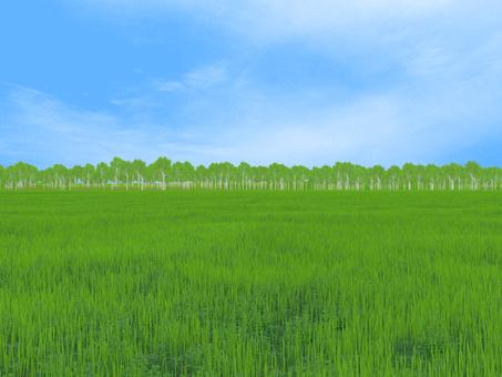 meadow (line)