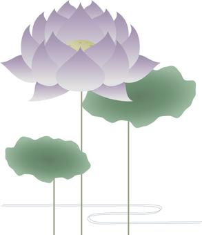 Lotus _ purple