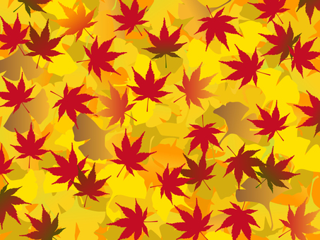 Japanese style material Autumn leaves Red background and maple