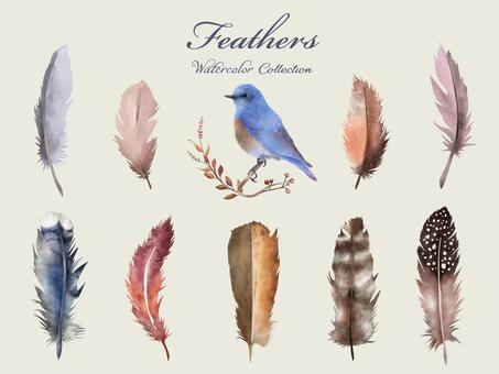 Ruribitaki和羽毛收藏