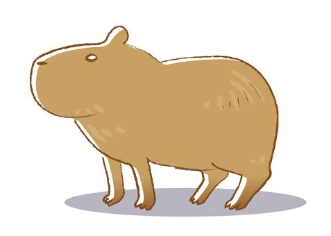 Capybara (Parent)