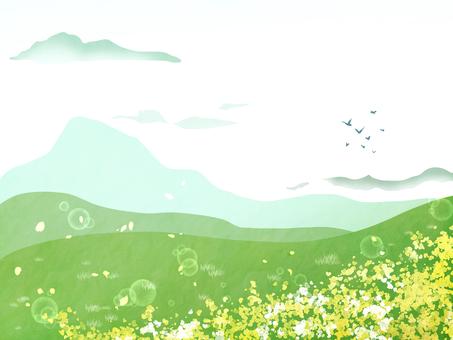 배경 소재 녹색과 유채 꽃