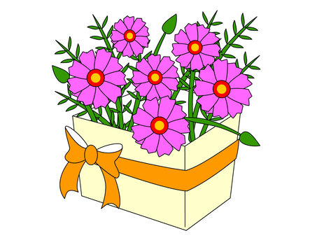 Cosmos ~ bouquet / flower gift
