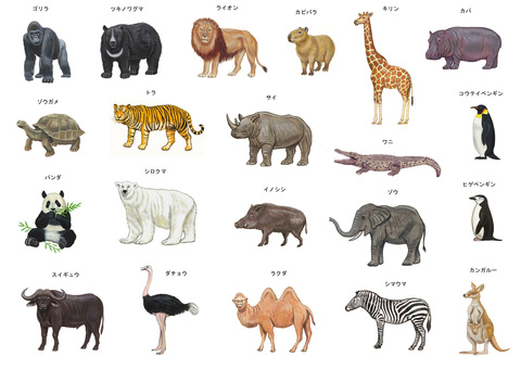Zoo illustration set