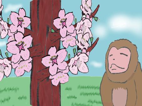 Hanami monkey