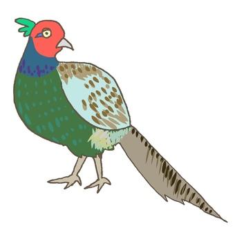 Pheasant (male)