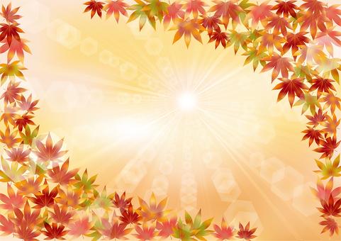 Autumn leaves 131