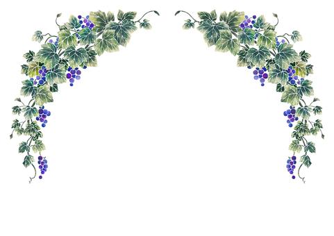 Grape illustration frame 07-1 (white line)