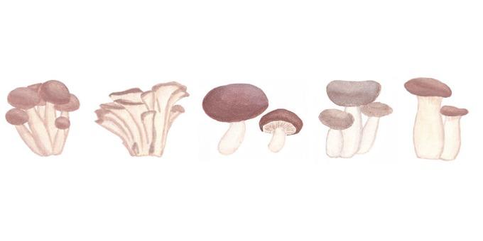 5 types of mushrooms