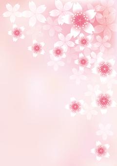 벚꽃의 꽃 24