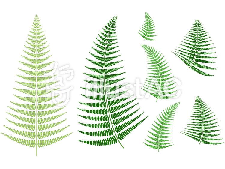 シダの葉のイラスト