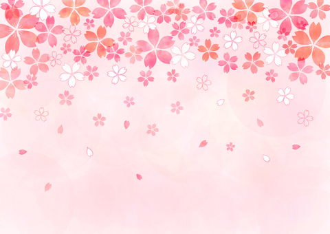 Cherry blossoms _ pastel _ pink background 1841