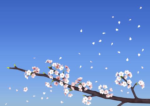 꽃잎 흩 날리는 벚꽃