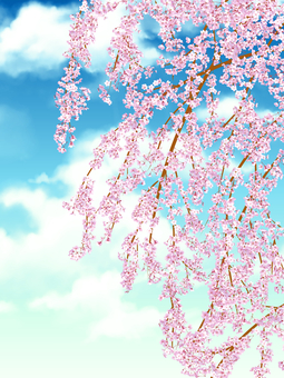 Weeping cherry blossoms and sky