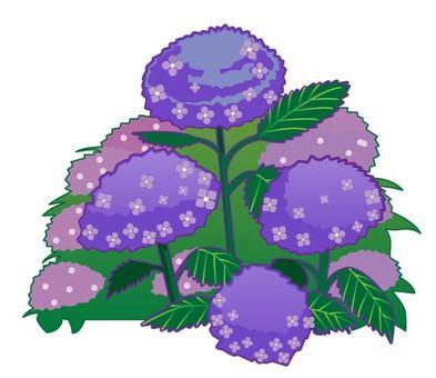 Hydrangea flower bed