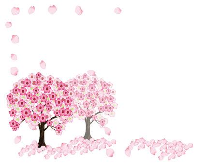 Cherry tree -2