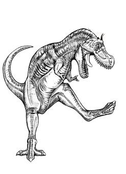 Young Tyrannosaurus