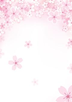 벚꽃 13