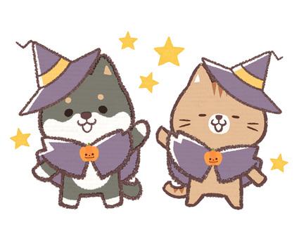 Halloween Black Shiba Inu Cat