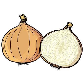 양파 / 양파 / 양파 / Onion