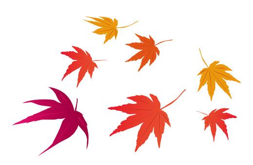 Autumn leaves (maple) 3