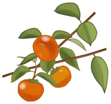 Persimmon 1 / Fruit