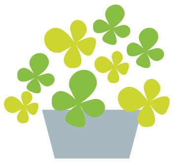 Potted plants - Clover