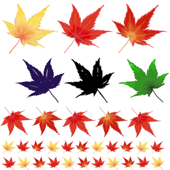 Maple ★ Autumn leaves