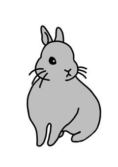 Rabbit Netherlands Dwarf