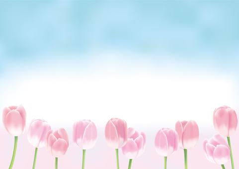 튤립 _ 핑크