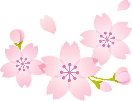 200125.Sakura 4