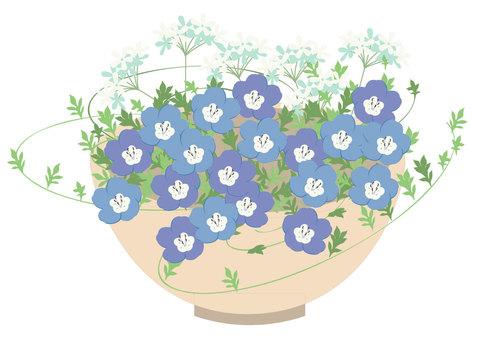 네모 피라의 꽃