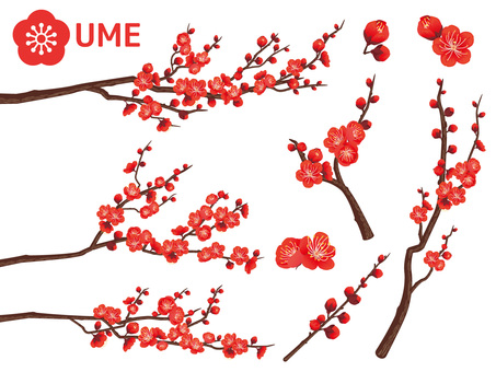 Cut out branches of New Year plum _ red plum 03