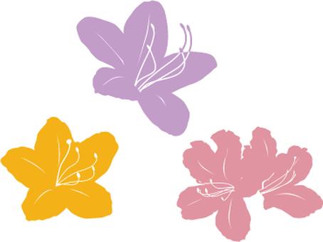 Three color azalea