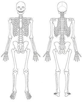 Human body series
