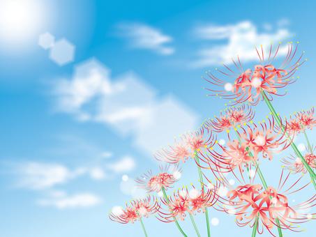 Bana flowers _ empty