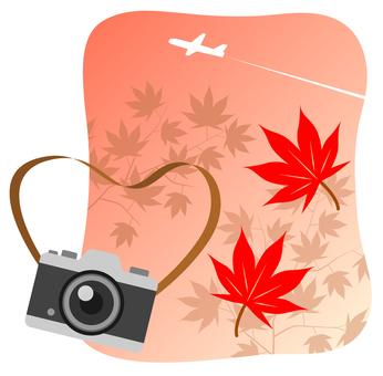 カメラと紅葉したモミジと飛行機