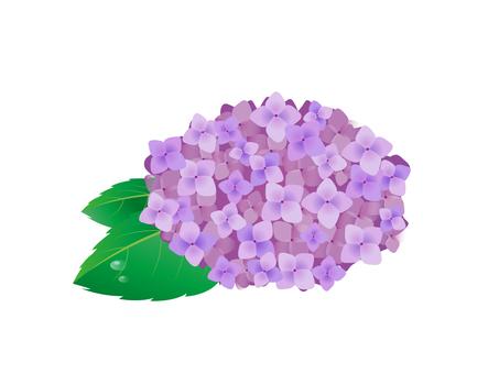수국 꽃 4