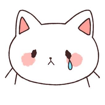Namida cat
