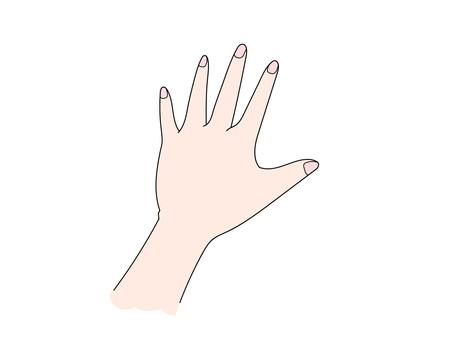 왼쪽 손등