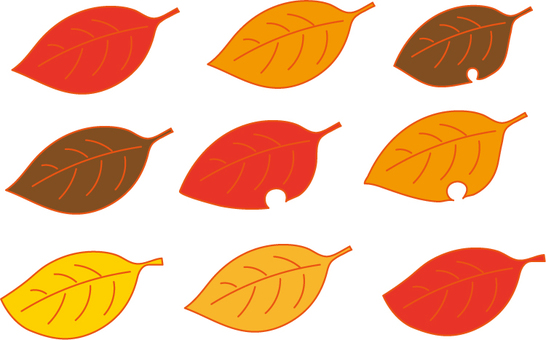 Various fallen leaves.